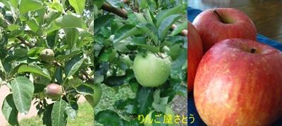 リンゴGroup