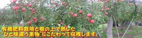 Topりんご#2